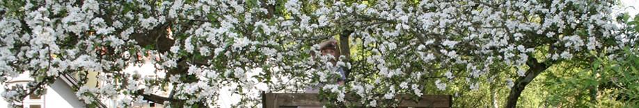 Havearkitekt Janni Tousgaard – Minimalistisk have